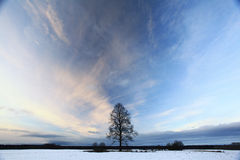 Lonely tree in a field of snow Stock Image