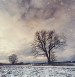 Lonely tree in a field of snow Royalty Free Stock Photography