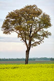 Lonely tree on field Stock Photos