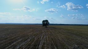 Lonely tree in the field at sunset, aerial photography of video in motion. Lonely tree in the field at sunset, aerial photography of the video in motion in the stock video