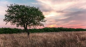 Lonely tree in a field with sunset. On the background. 4k, time lapse. Other camera movements, raw flat color, frame rates, formats, and resolutions are stock footage