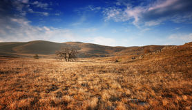 Lonely tree in a field under a blue sky Stock Photography