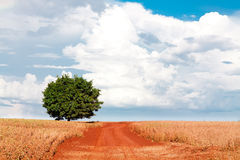 Lonely tree on field under blue sky and different clouds Royalty Free Stock Images