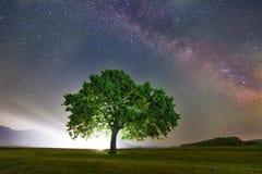 Lonely tree on field under milky way galaxy, Dobrogea, Romania Stock Images