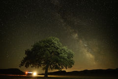 Lonely tree on field under the night sky Royalty Free Stock Image