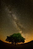 Lonely tree on field under the night sky Royalty Free Stock Photo