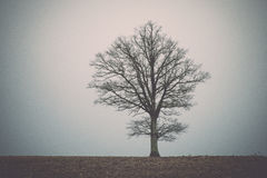 Lonely tree in the field Stock Images