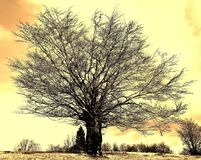 Lonely tree on the field. In winter Stock Photography