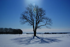 Lonely tree in a field in winter Royalty Free Stock Images
