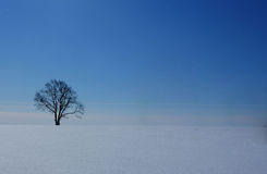 Lonely tree in a field in winter Royalty Free Stock Photo