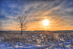 Lonely tree in field, winter at sunset Royalty Free Stock Images