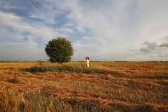 Lonely tree in the field. Lonely tree in the yellow field  in summer Royalty Free Stock Photography