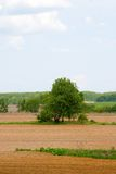 Lonely tree among the fields royalty free stock photography