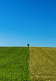 Lonely tree on the fields Stock Photo