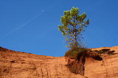 Lonely tree. Fighting for survival Royalty Free Stock Photos