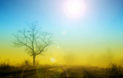 Lonely tree in fog. Misty sunrise with lonely tree in fog Stock Images