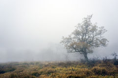 Lonely tree with fog Royalty Free Stock Images