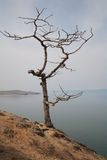 Lonely tree in a fog on the coast Royalty Free Stock Photo