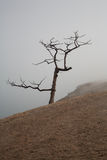 Lonely tree in a fog on the coast Stock Images