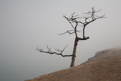 Lonely tree in a fog on the coast Stock Photo
