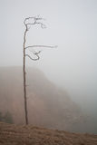 Lonely tree in a fog on the coast Royalty Free Stock Photos