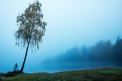 Lonely tree. By fog covered lake an early fall morning Royalty Free Stock Photography