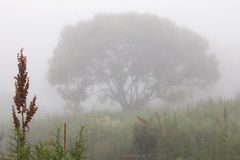 Lonely tree in fog Royalty Free Stock Photos