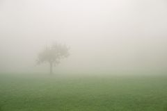 Lonely tree on a foggy day Royalty Free Stock Photography