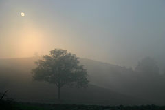 Lonely tree in foggy sunset and distant hills Stock Image