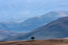 Lonely tree at foot of Drakensberg range. Of mountains in South Africa Royalty Free Stock Photography