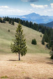 Lonely tree in forest Royalty Free Stock Photography