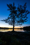 Lonely tree. By forest lake in twilight in dawn Royalty Free Stock Photography
