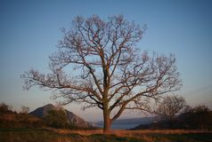 Lonely tree. Lonely forrest tree Royalty Free Stock Image