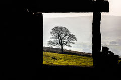 Lonely Tree through the Frame. D ruin Stock Photos