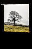 Lonely Tree through the Frame 2. Lonely Tree through the old window Frame Stock Photos