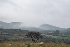 A lonely tree in front of the hills. stock images