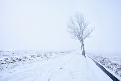 Lonely tree in frost Stock Images