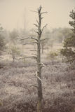 Lonely tree in frosty winter bog - aged photo Stock Photo