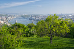 Lonely tree in Gellert hill park, Budapest, Hungary Stock Images
