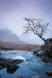 Lonely tree in glencoe. A lonely tree overlooking a waterfall in glencoe in winter in scotland Royalty Free Stock Photo