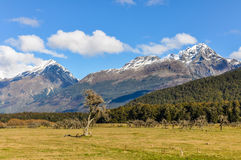 Lonely tree in Glenorchy, New Zealand Royalty Free Stock Photos