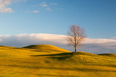 Lonely tree on the golf course. On the empty golf course in autumn Royalty Free Stock Photos