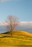 Lonely tree on the golf course. On the empty golf course in autumn Stock Photography