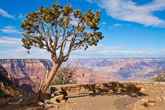 Lonely tree at Grand Canyon Royalty Free Stock Photos
