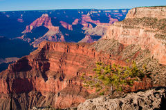 Lonely Tree in Grand Canyon National Park,Arizona,USA. Amazing Landscape in World-Famous Grand Canyon National Park,Arizona Stock Image