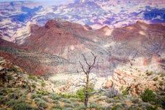 Lonely tree, Grand Canyon, USA Royalty Free Stock Photo