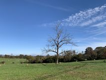A lonely tree in a grassy landscape with the blue sky and white clouds stock photos