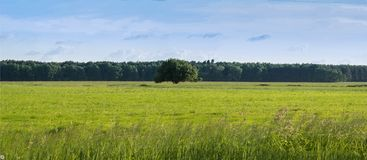 Lonely tree on a green bright field. In the background forest stock photography