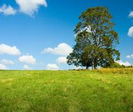 Lonely tree in a green field Royalty Free Stock Photo