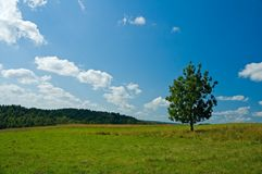Lonely tree in a green field Royalty Free Stock Photos
